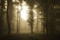Темный лес на заходе солнца с загадочными светом и туманом стоковое изображение