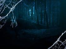 Темный лес ночи Стоковые Изображения RF