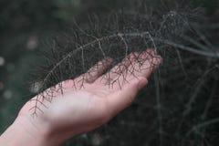 Темный лес стоковое фото