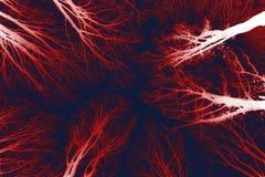 Темный мистический лес Стоковое Изображение RF