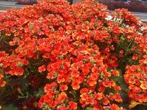Темный - оранжевые цветки стоковые фото