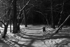 Темный переулок Стоковые Изображения RF