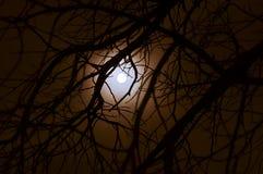 Темный полный лунный свет в лесе Стоковые Изображения RF