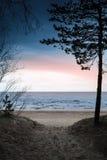 Темный прибрежный ландшафт вал сосенки озера baikal предпосылки Стоковые Фото