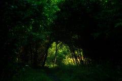 Темный путь леса Стоковая Фотография