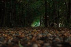 Темный путь леса предусматриванный в листьях водя к сияющему концу тоннеля дерева стоковые изображения rf