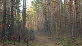 темный плотный лес Стоковое фото RF