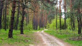 темный плотный лес Стоковые Фото