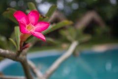 Темный розовый цветок Стоковые Фото