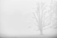 Темный силуэт дерева в тумане Стоковая Фотография RF