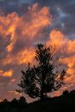 Темный силуэт дерева против неба захода солнца Стоковое фото RF