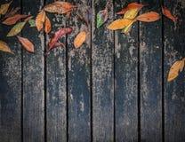 Темный старый деревянный пол с предпосылкой листьев Стоковые Изображения RF