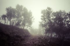 Темный страшный лес лиственного дерева Стоковое Изображение