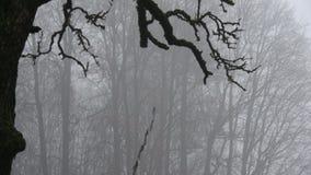 Темный туман утра зимы в покинутом саде фермы акции видеоматериалы