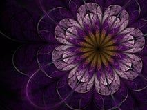 Темный фиолетовый цветок фрактали Стоковые Изображения