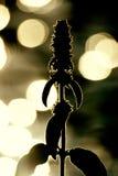 темный цветок Стоковое Фото
