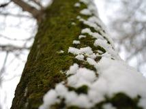 Темный ый-зелен мох и кристаллический белый снег покрывая дерево Стоковые Изображения RF