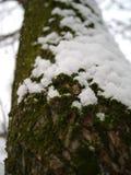 Темный ый-зелен мох и кристаллический белый снег покрывая дерево Стоковая Фотография