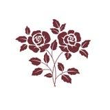 2 темных розы Стоковые Изображения
