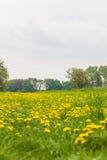 темы весны спокойствия мира лужка свежести одуванчика принципиальных схем полезные Стоковая Фотография RF