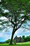 Тенистые деревья в середине парка стоковое фото