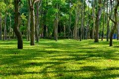 Тенистые деревья в парке Стоковые Фото