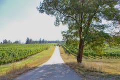 Тенистый вход к солнечный винограднику Стоковое Изображение RF