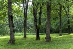 Тенистый парк лета с хоботами высоких деревьев, кустарников и зеленой травы Стоковое Изображение RF