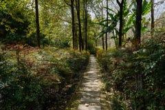 Тенистый путь в кустарниках и деревьях на солнечном полдне весны стоковые фото