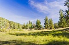 Тенистый луг горы Стоковые Фотографии RF