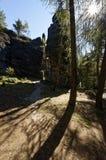 Тени бросили корами дерева против фона высокорослых скал Стоковые Изображения