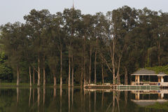 Тени вечера дерева Стоковое фото RF