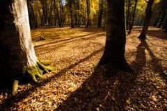 Тени дерева в лесе горы с солнечными лучами Стоковые Изображения RF