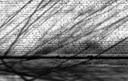 Тени дерева на кирпичной стене grunge в черно-белом Стоковое фото RF