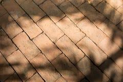 Тени дерева на поле бетонной плиты Стоковая Фотография RF