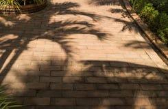 Тени дерева на поле бетонной плиты Стоковые Изображения RF