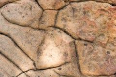 Тени дерева на поле бетонной плиты Стоковая Фотография