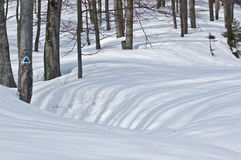 Тени деревьев в зиме Стоковые Изображения