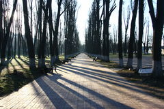Тени деревьев на переулке парка на утре весны Стоковое фото RF