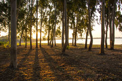 Тени, деревья, солнце, отражения, рассвет Стоковые Изображения RF