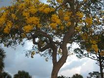 Тени желтого цвета стоковые фото