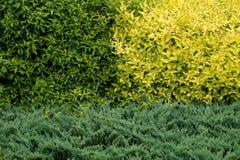 3 тени зеленого цвета в саде, 3 видов заводов inc стоковое изображение