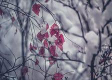 Тени зимы, деревья, который замерли листья Стоковая Фотография