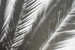 Тени листьев ладони на текстурированной стене Стоковое фото RF