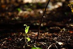 Тени листьев Стоковые Изображения