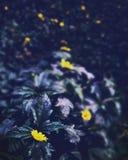 Тени и фотография светов Стоковые Фото