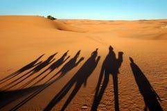 тени каравана верблюда Стоковая Фотография RF