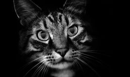 тени любимчика кота стоковая фотография