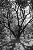 тени на деревьях в suny дне Стоковые Фото