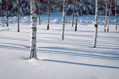 Тени на снежке Стоковые Изображения